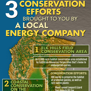 Three Conservation Efforts Brought To You By A Local Energy Company